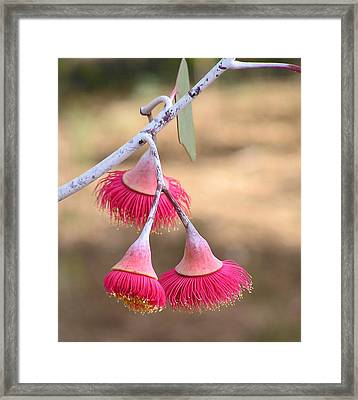 Dancing Pink Framed Print by Margaret Saheed
