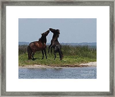 Dancing Ponies Framed Print by Cathy Lindsey