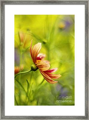 Dancing Solo Framed Print by Darren Fisher
