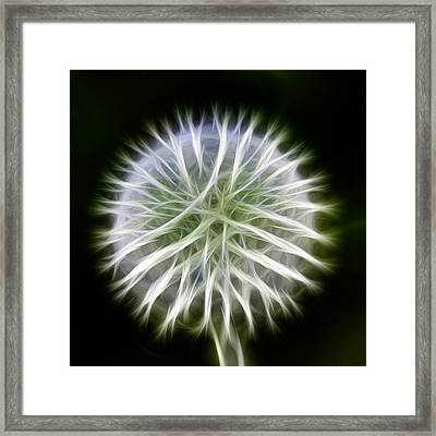 Dandelion Abstract Framed Print by Omaste Witkowski