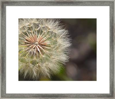 Dandelion Art - So It Begins - By Sharon Cummings Framed Print by Sharon Cummings