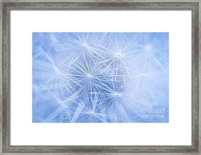 Dandelion Atmosphere Framed Print by Elena Elisseeva