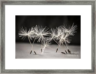 Dandelion Ballet Framed Print by Elena Elisseeva