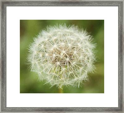 Make A Wish Framed Print by Dan Sproul