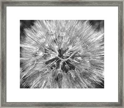 Dandelion Fireworks In Black And White Framed Print by Rona Black