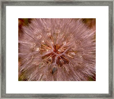 Dandelion Fireworks Framed Print by Rona Black