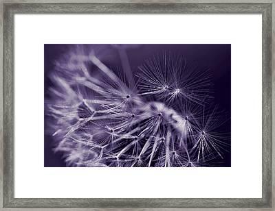 Dandelion Fly Away Dark Purple Framed Print by Jennie Marie Schell