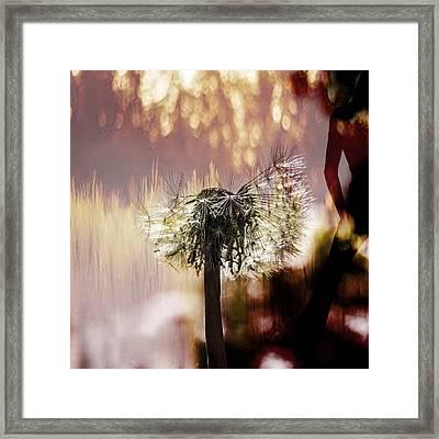 Dandelion In Summer Framed Print by Toppart Sweden
