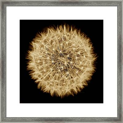 Dandelion Macro Abstract Sepia Brown Framed Print by Jennie Marie Schell
