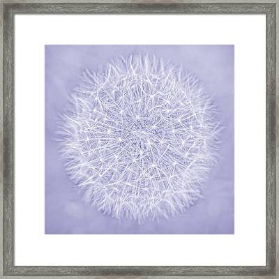 Dandelion Marco Abstract Lavender Framed Print by Jennie Marie Schell