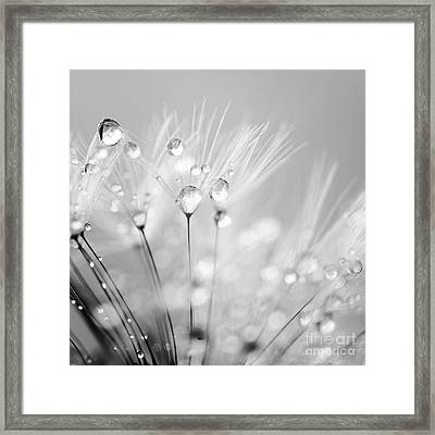 Dandelion Seed With Water Droplets In Black And White Framed Print by Natalie Kinnear