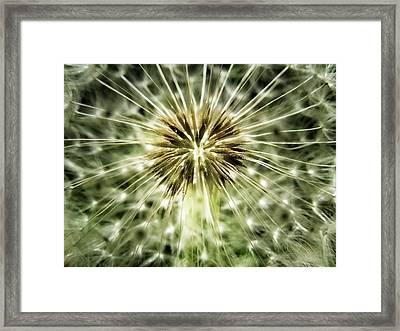 Dandelion Seeds Framed Print by Marianna Mills