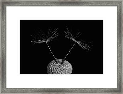 Dandelion Seeds  Waterloo, Quebec Framed Print by David Chapman