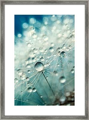 Dandelion Starburst Framed Print by Sharon Johnstone