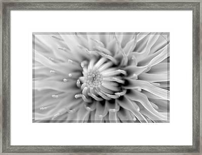 Dandelion Framed Print by Toppart Sweden