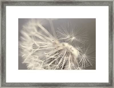 Dandelion Weed Soft Gray Brown Framed Print by Jennie Marie Schell