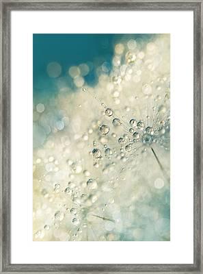 Dandy Dazzle Framed Print by Sharon Johnstone