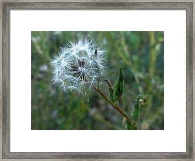 Dandy Framed Print by Jewell Jeffery