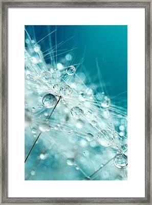Dandy Starburst In Blue Framed Print by Sharon Johnstone