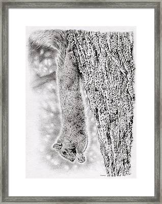 Dangling Squirrel Framed Print by Remrov