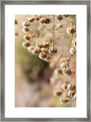 Dangling Thrift Framed Print by Anne Gilbert