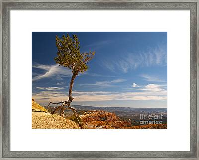 Danse Sur Pointes Framed Print by Alex Cassels