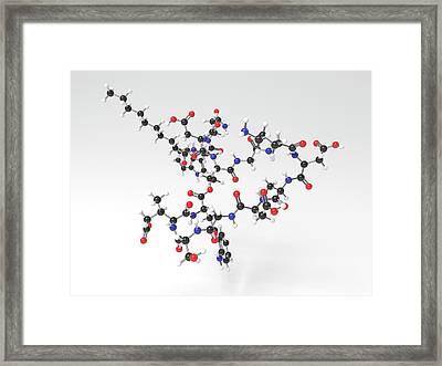 Daptomycin Antibiotic Molecule Framed Print by Indigo Molecular Images