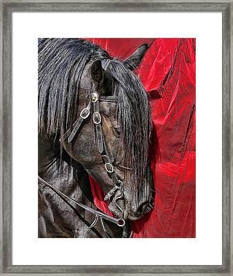 Dark Horse Against Red Dress Framed Print by Jennie Marie Schell