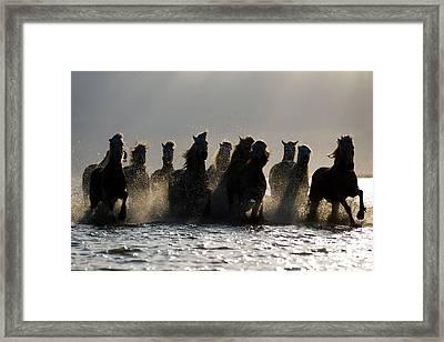 Dark Horses Framed Print by Carol Walker