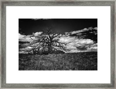 Dark Tree Framed Print by Tony Boyajian