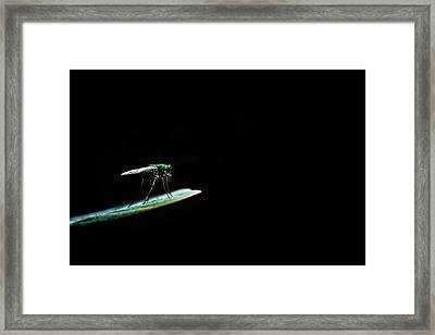 Dark World Framed Print by Suradej Chuephanich