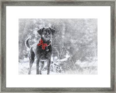 Dashing Through The Snow Framed Print by Lori Deiter