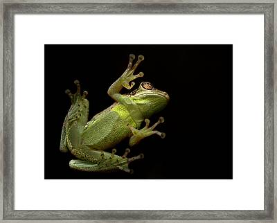 Date Night Framed Print by Laura Fasulo