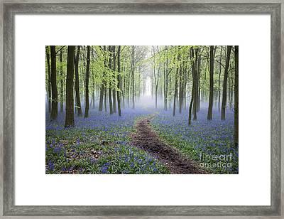 Dawn Bluebell Wood Framed Print by Tim Gainey