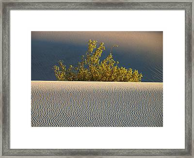Dawn Mesquite  Framed Print by Joe Schofield