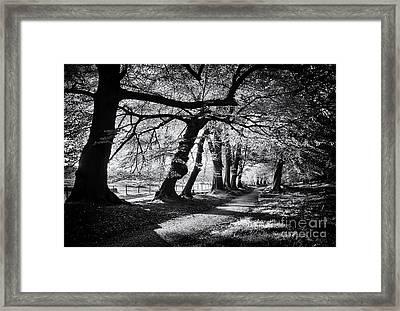 Dawn Tree Light  Framed Print by Tim Gainey
