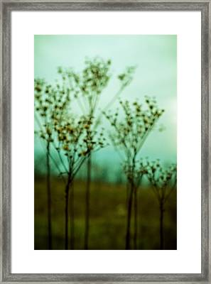Daydream Framed Print by Joy StClaire