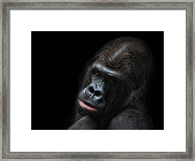 Daydreamer Framed Print by Joachim G Pinkawa