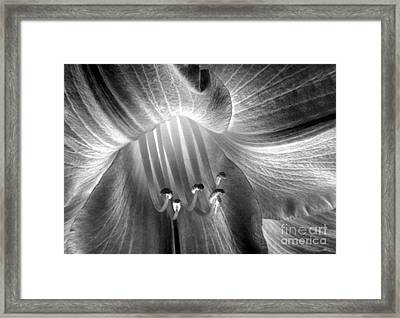 Daylily Pistils Solarized In Original Black And White Framed Print by ImagesAsArt Photos And Graphics