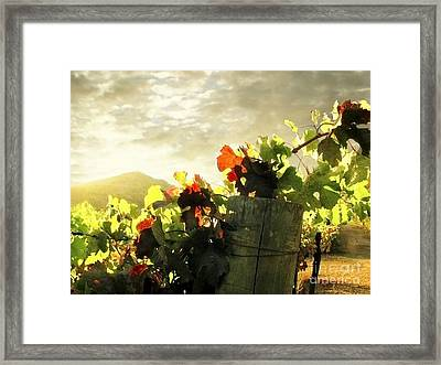 Days End In Napa Framed Print by Ellen Cotton