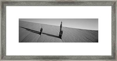 Dead Pine Tree At Coral Pink Sand Dunes Framed Print by Panoramic Images
