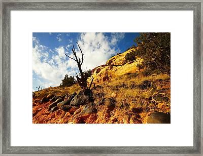 Dead Tree Against The Blue Sky Framed Print by Jeff Swan