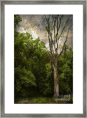 Dead Tree Framed Print by Lena Auxier