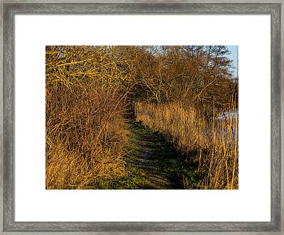 december light - Leif Sohlman Framed Print by Leif Sohlman