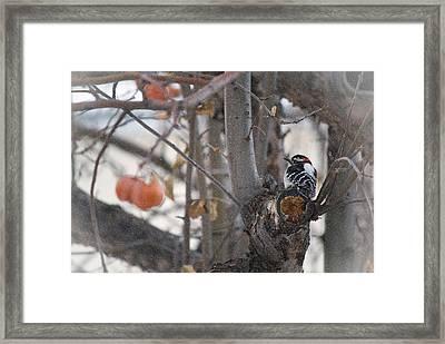 December Snow Framed Print by Lisa Knechtel