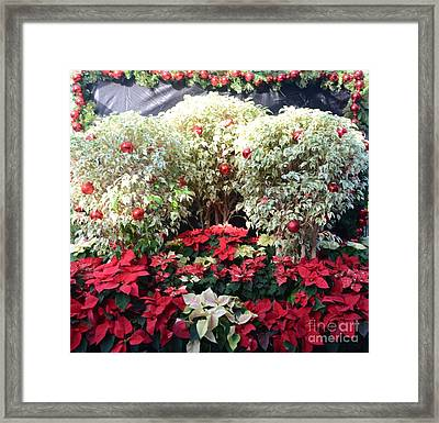 Decorated For Christmas Framed Print by Kathleen Struckle