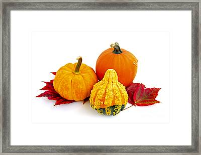Decorative Pumpkins Framed Print by Elena Elisseeva