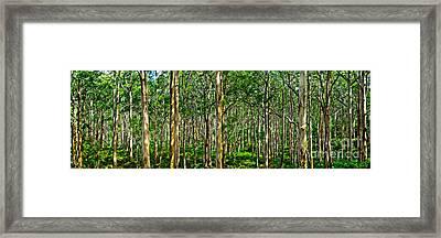 Deep Forest Framed Print by Az Jackson