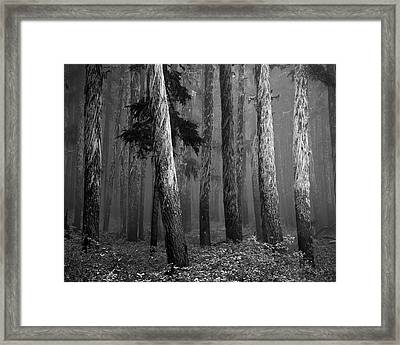 Deep Forest Framed Print by Leland D Howard