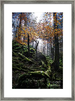 Deep Forest Framed Print by Yuri Santin